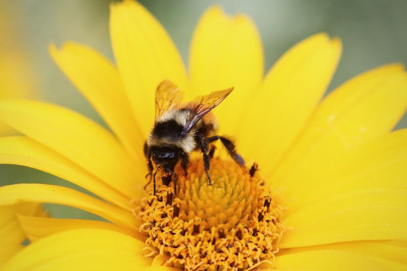 やれることはたくさんある!!花粉症対策のあれこれ。